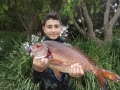 Young sub junior George Manolias made his dad and uncles proud with a 1.5kg red morwong.